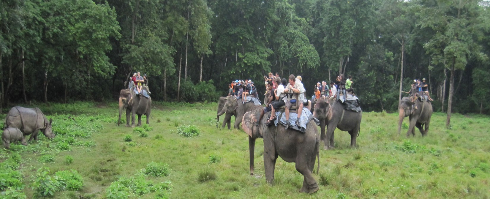 A best wildlife Safari Tour Chitwan Nation park in Nepal