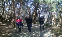 On the way to Ghorepani through Rhododendron forest